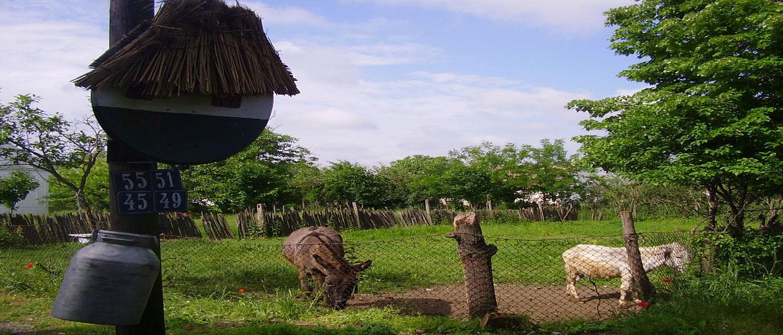 Vojvodjanski-salas